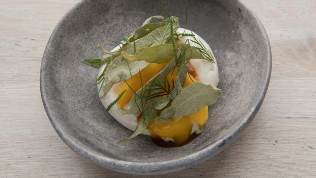 Frozen yoghurt with mango, saltbush and hints of hops.