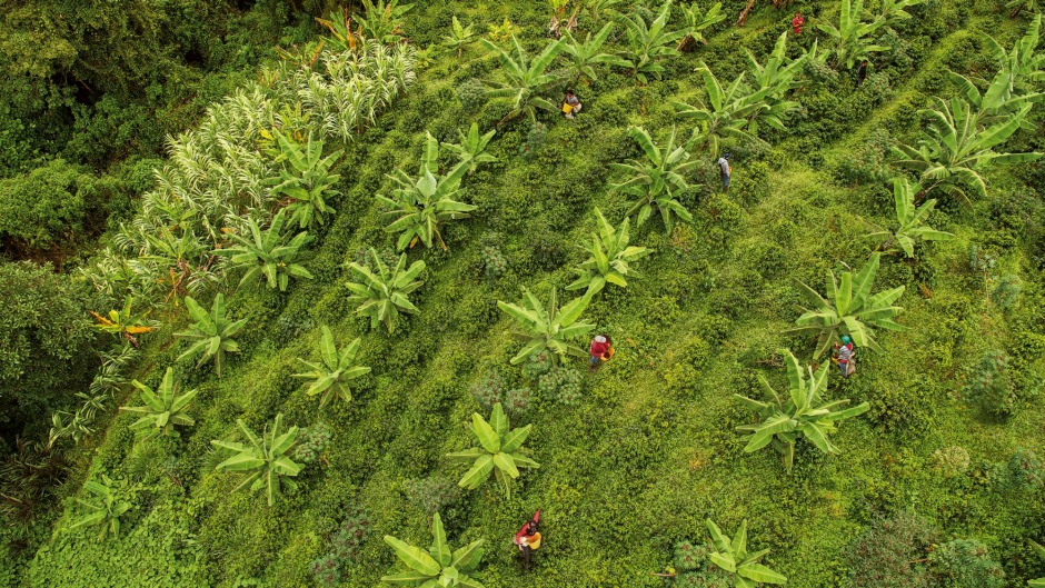 There is a large market for sustainability, including coffee plantation communities.