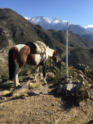 Get out of Buenos Aires and embrace Argentina's gaucho (cowboy) culture by seeing some of the countryside on horseback.