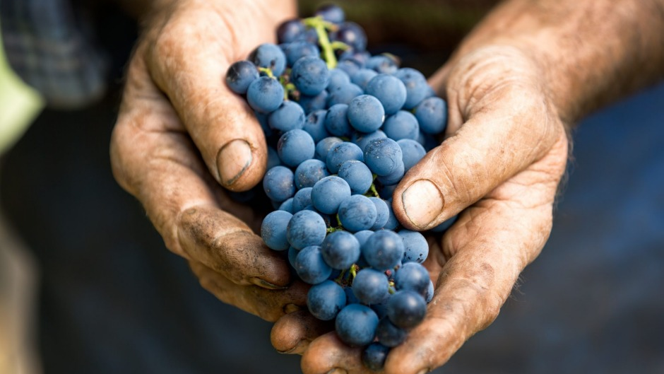 Wines with organic certification must be made from grapes grown without added chemicals.