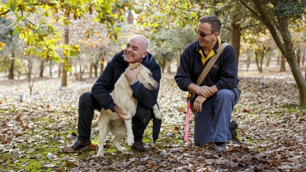 Chef Mark Best (left) and Australian Truffle Traders' Gavin Booth in Manjimup, Western Australia.
