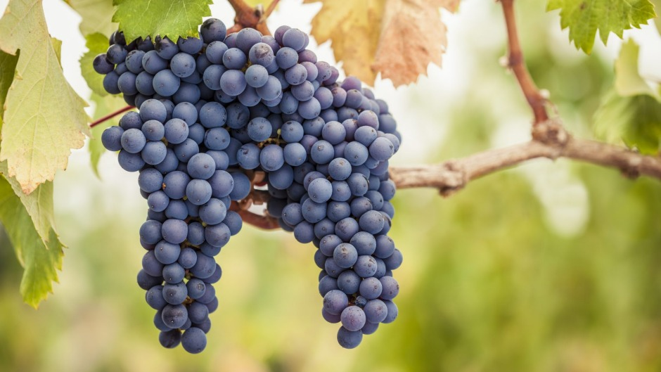 Mornington and Yarra Valley are both proven sources of fine pinot.
