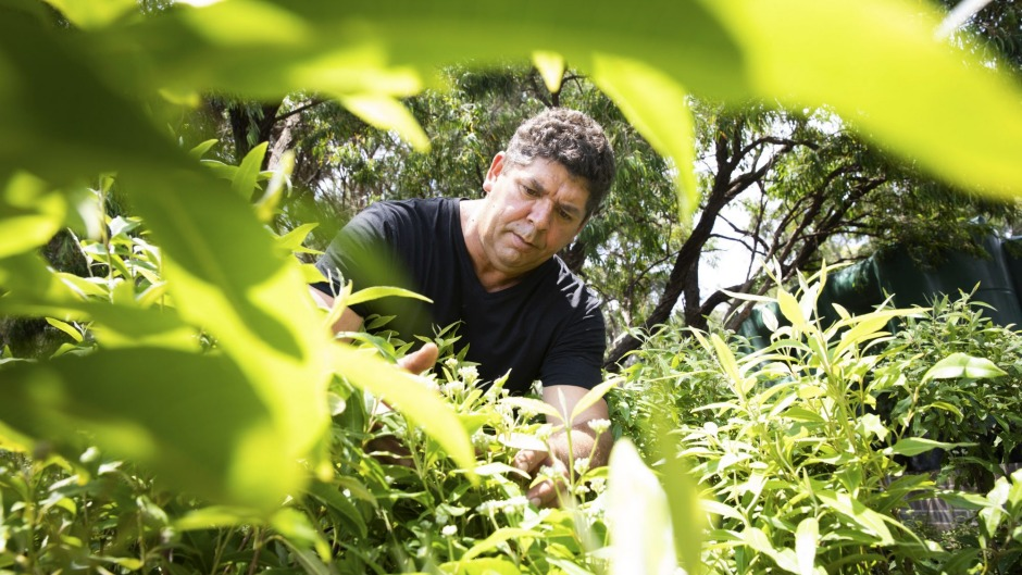 Peter Cooley, First Hand Solutions co-founder, in the IndigiGrow bush foods nursery at La Perouse Primary School.