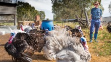 Daryl Deutscher is one of seven independent Australian turkey farmers who, between them, grow 750,000 of the five ...