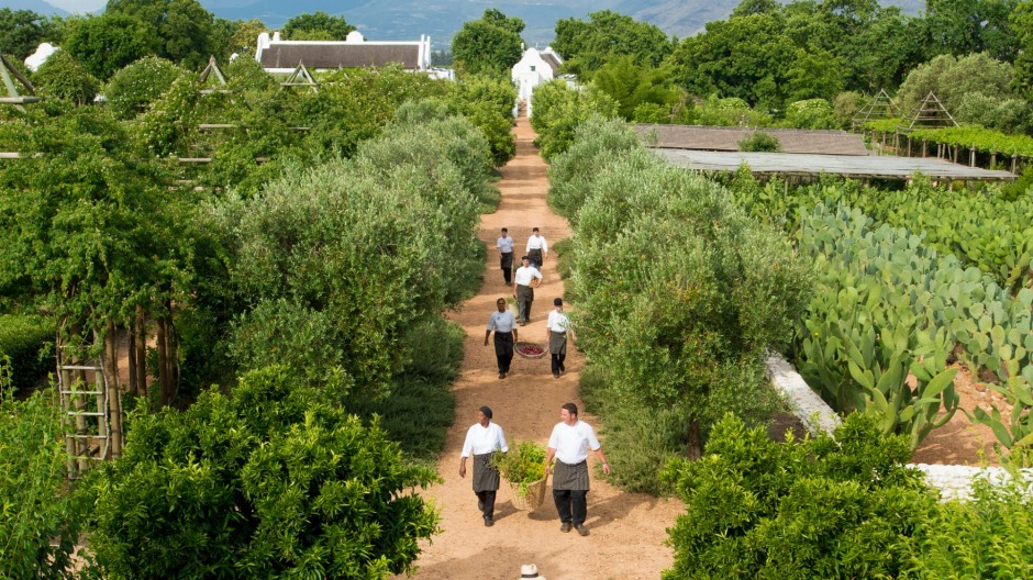The chef's garden at Babylonstoren in South Africa.