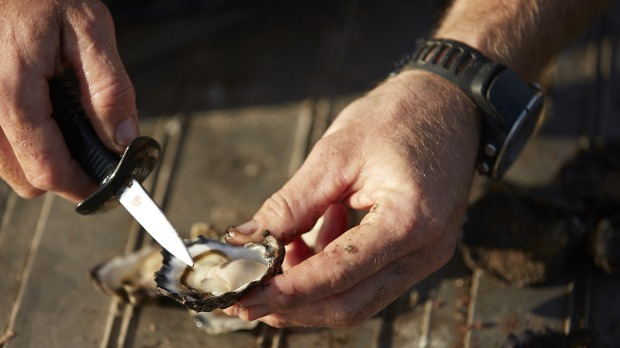 A Wapengo Sydney rock oyster harvested for Australia's Oyster Coast.