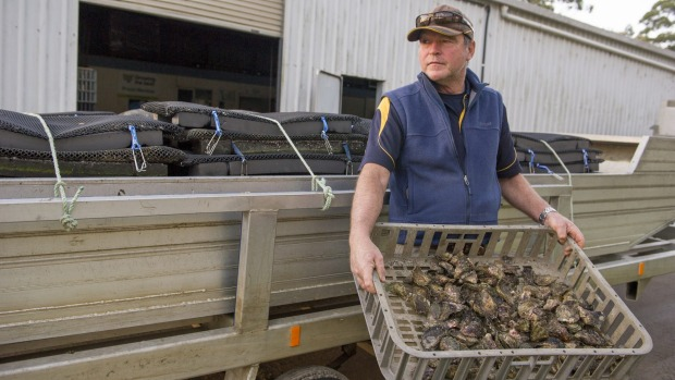 Merimbula oyster farmer Hugh Wheeler says bushfires have had a significant impact South Coast tourism and oyster sales.