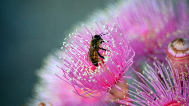 Read up on backyard beehives and aim to make this the year.