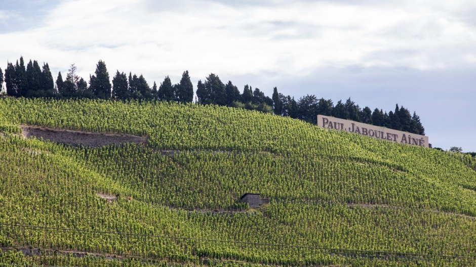 Marsanne wine country in the Rhone valley, France.