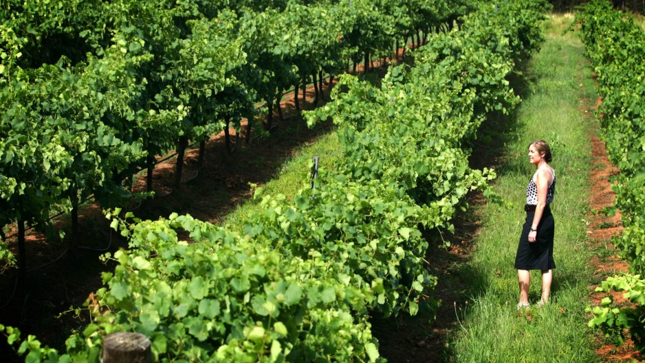 Tulloch Wines chief executive Christina Tulloch says the smoke taint results have hit hard.