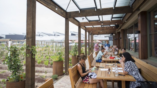 The indoor-outdoor Glasshouse cafe overlooks the rooftop farm.
