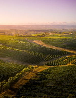McLaren Vale in South Australia.