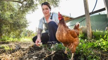 Bar owner Anita Basile with the chickens at Brunswick South West Primary,