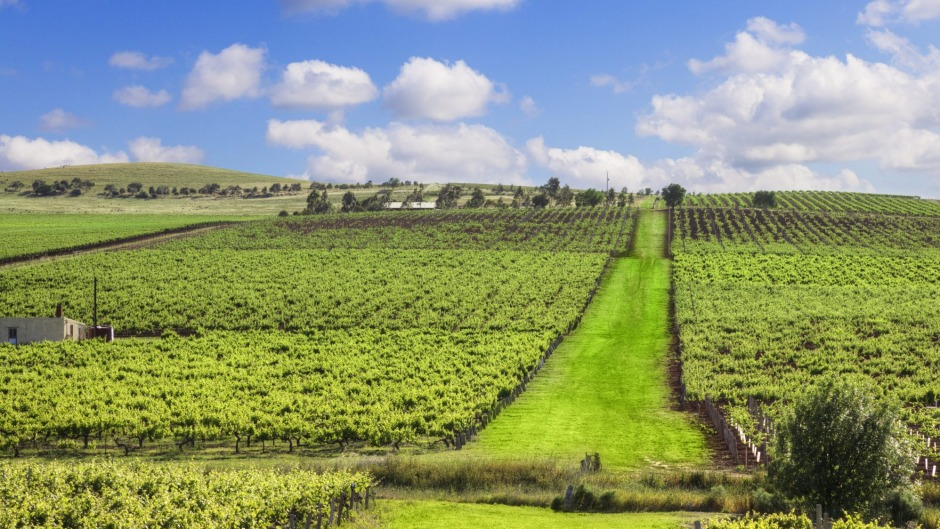 The region's time-honoured classic styles compare to wines from many more trendy districts.