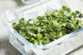 Store fresh leafy herbs in a sealed container between sheets of dry paper towel.