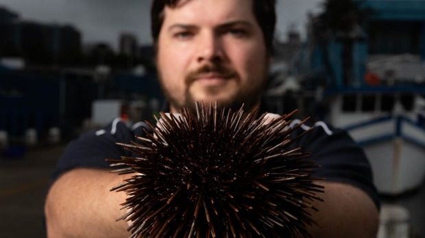 Alex Stollznow with a sea urchin at Sydney Fish Market.