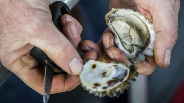 Freshly opened oysters farmed in Merimbula by Brett Weingarth, owner and captain of Captain Sponges Magical Oyster Tours. Supplied PR image for Traveller. Supplied PR image for Traveller. Captain Sponge's Magical Oyster Tours. Destination NSW image. Must credit Destination NSW