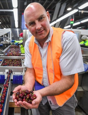 Mr Riseborough on the CherryHill sorting line.