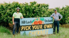 Cherry farmer Michael Hamdan (left) with his father Khodr at their orchard Wombat, just south of Young, NSW.