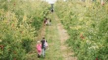 Find your patch and get picking at patch at Glenbernie Orchard.