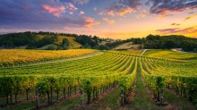 The vineyard altitudes range from about 300 to 550 metres in the Adelaide Hills.