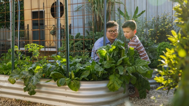 Chinese father with his mixed race son in their garden tending to their vegetable patch together. Father and son gardening at home iStock