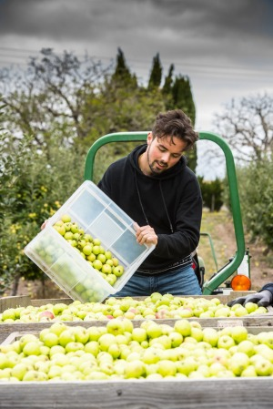 A Learmonth local helps with the 2021 Michelin cider apple harvest