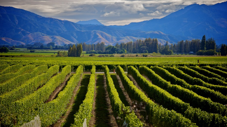 Aotearoa produces an exciting variety of wines.