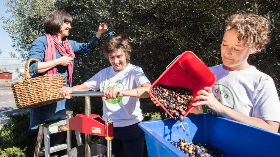 From left, Nina Collins, Meg Montague and Merrin Layden from 3000Acres harvesting and pressing olives for oil.
