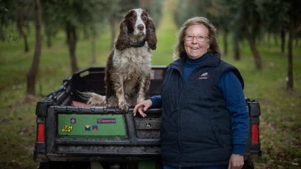 Red Hill Truffles owner Jenny McAuley and her dog Thomas are expecting a healthy truffle crop this winter.