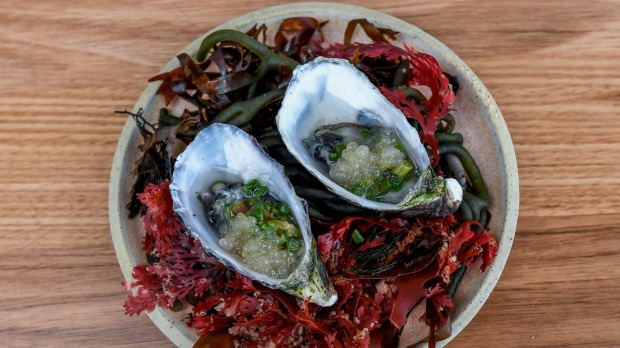 Seashore symphony: Oysters dressed with seaweed vinegar and  pickled fennel.
